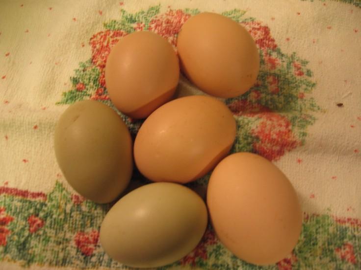 free range chicken eggs, colored chicken eggs