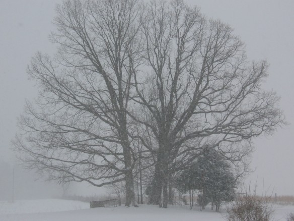snow covered tree in virginia
