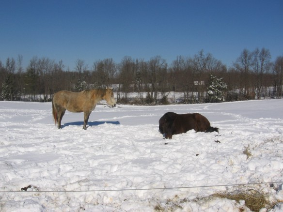 """Horse lying in the snow in Va"""