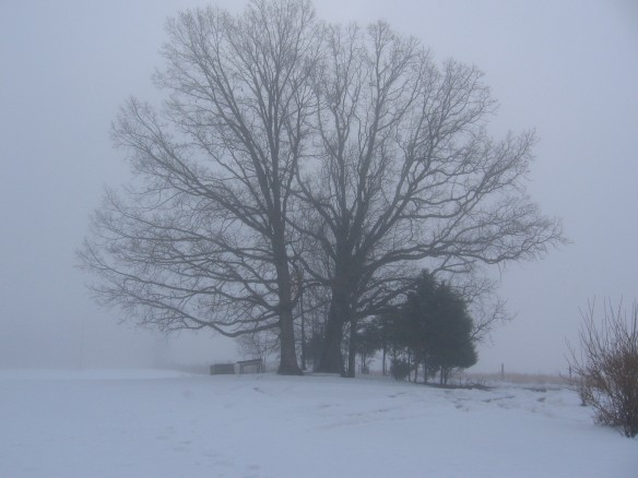 """tree in the snow"""