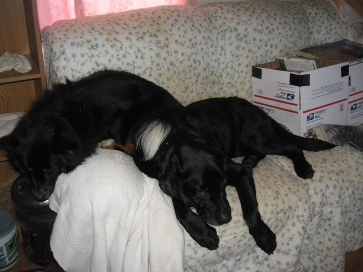 two dogs asleep on the couch