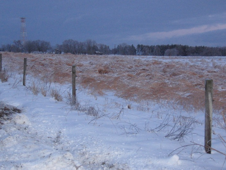 field of grass in the snow
