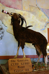 beer drinking goat