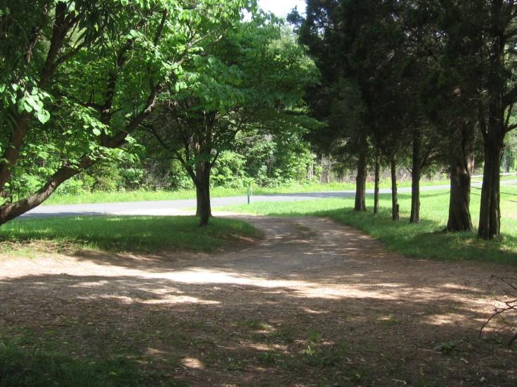 Shady Driveway
