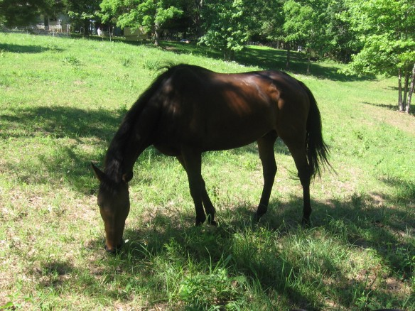 ex-race horse