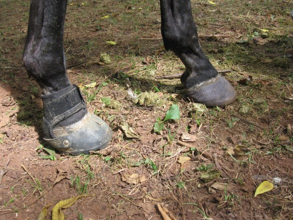 easyboots, natural hoof care, eva shoes, hoof casting