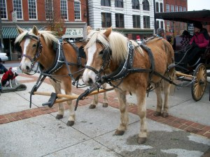 """""""horses pulling carriages"""" """"halfinger ponies"""" """"carriage rides at the community market in Lynchburg va."""""""