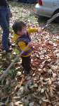 Ryland was pretty sure it would be a lot of fun to help rake leaves...but, the rake just wouldn't do what he wanted it to...