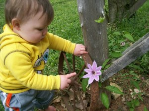 """Baby likes clematis flower"""